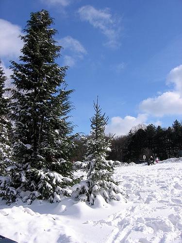 Novosadski Alpi
