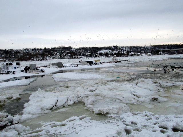 Zaleđeni Dunav